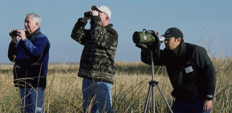beginner bird watching