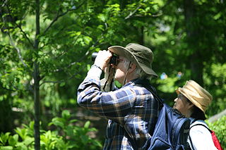 Birdwatching with a pair of binoculars