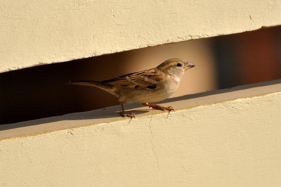 """<img src=""""sparrow.jpg"""" alt=""""sparrow framing"""">"""