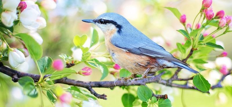 beautiful bird in a tree