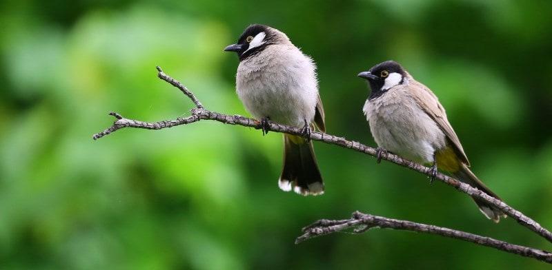birds in a tree 2