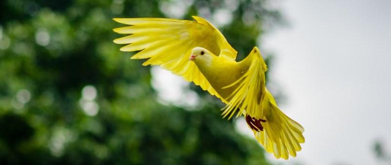 amazing looking bird