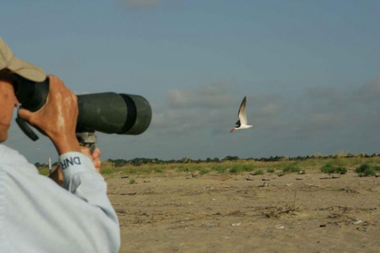 spotting scope on bird