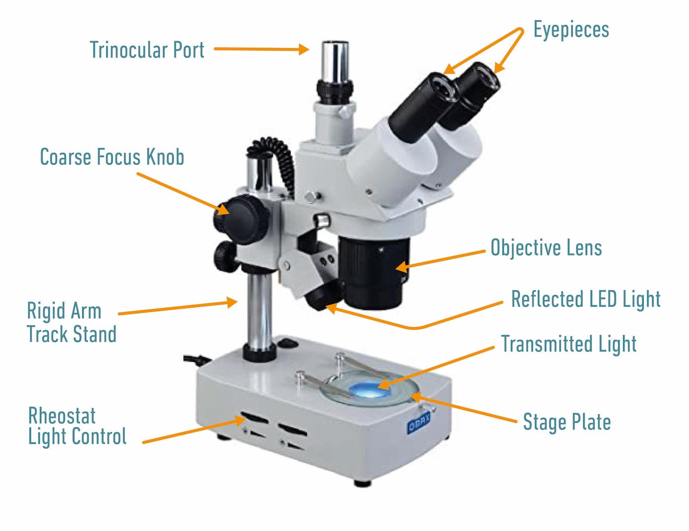 Stereoscopic microscope