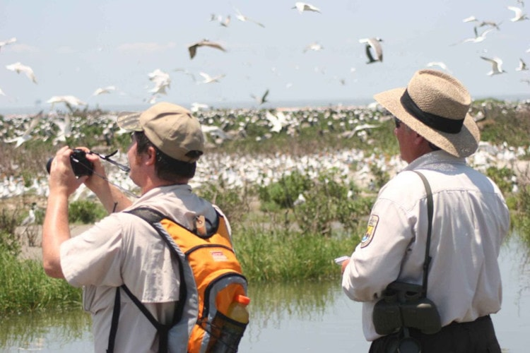 5 must-have pieces of equipment for the bird watcher