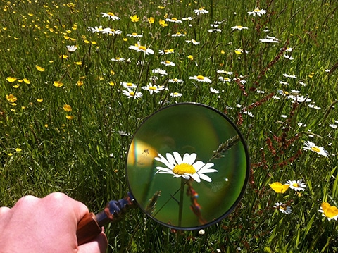 a magnifying glass outside