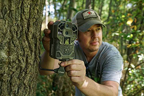hiding your camera in the woods