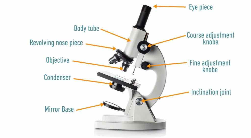 Light microscope diagram
