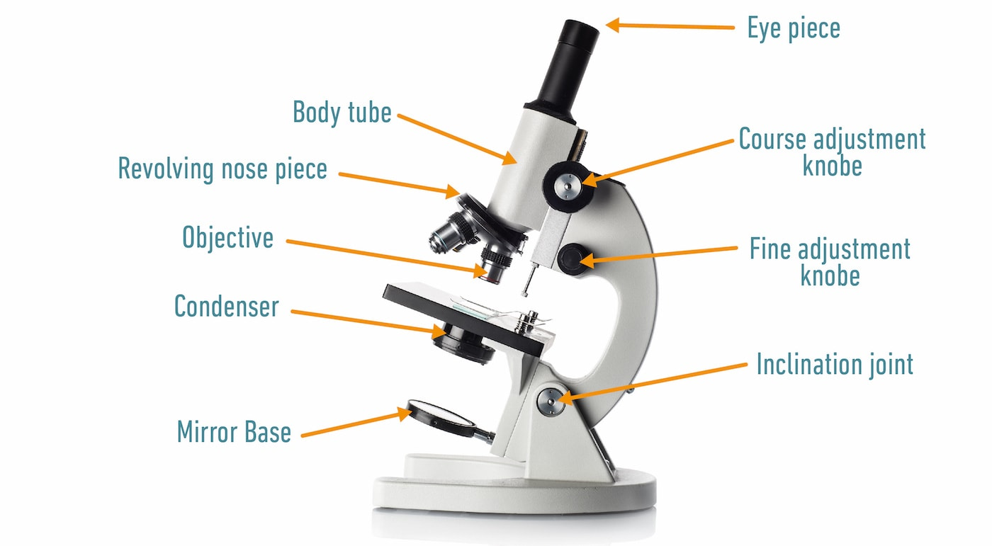 Light (compound) microscope diagram