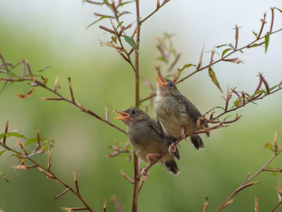 International Dawn Chorus Day: A Summer Morning Song (8 Birds to Listen For!) - Optics Mag
