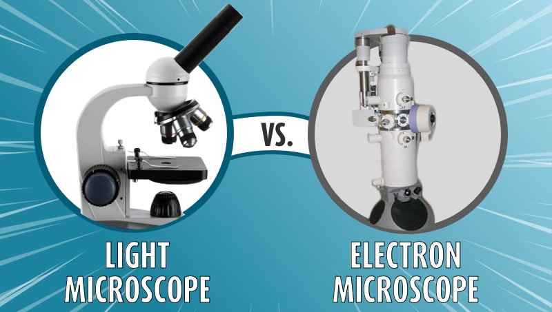 Light vs Electron Microscope