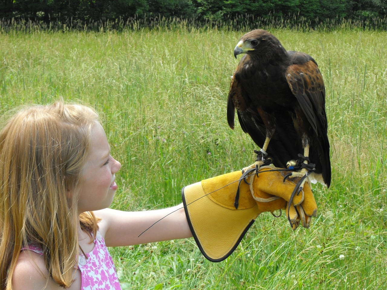 child and a hawk