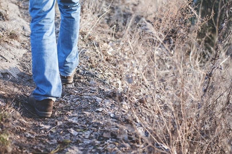 hiking-foot-pixabay