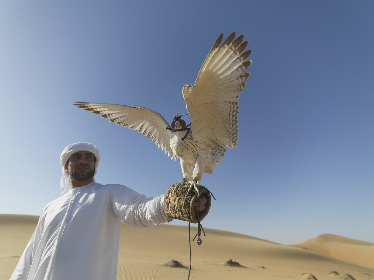 man and a falcon