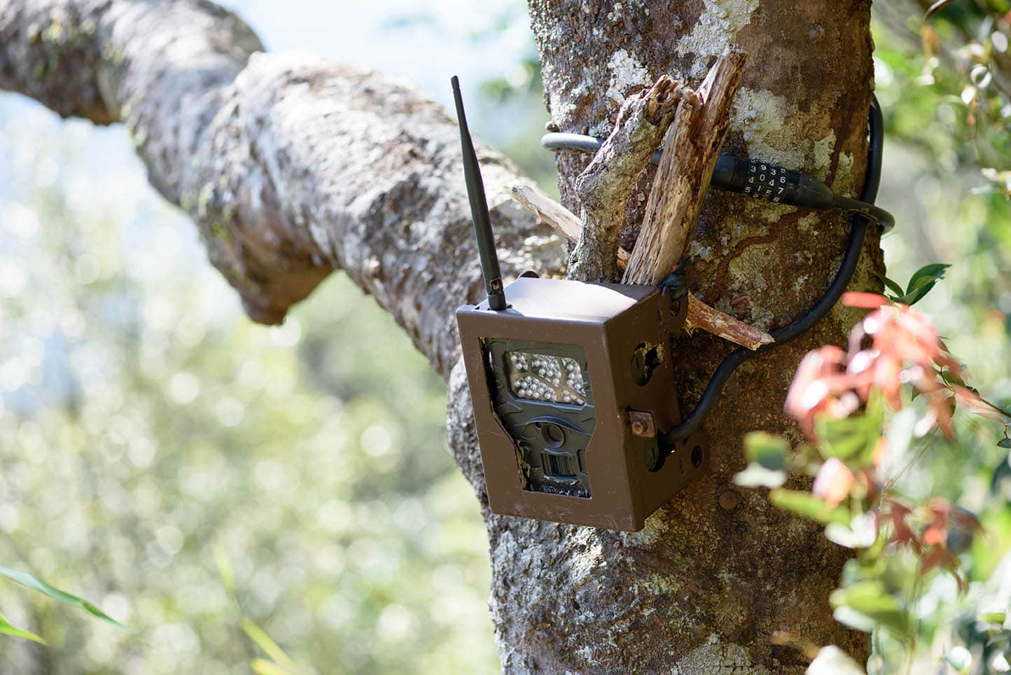trail camera with antenna