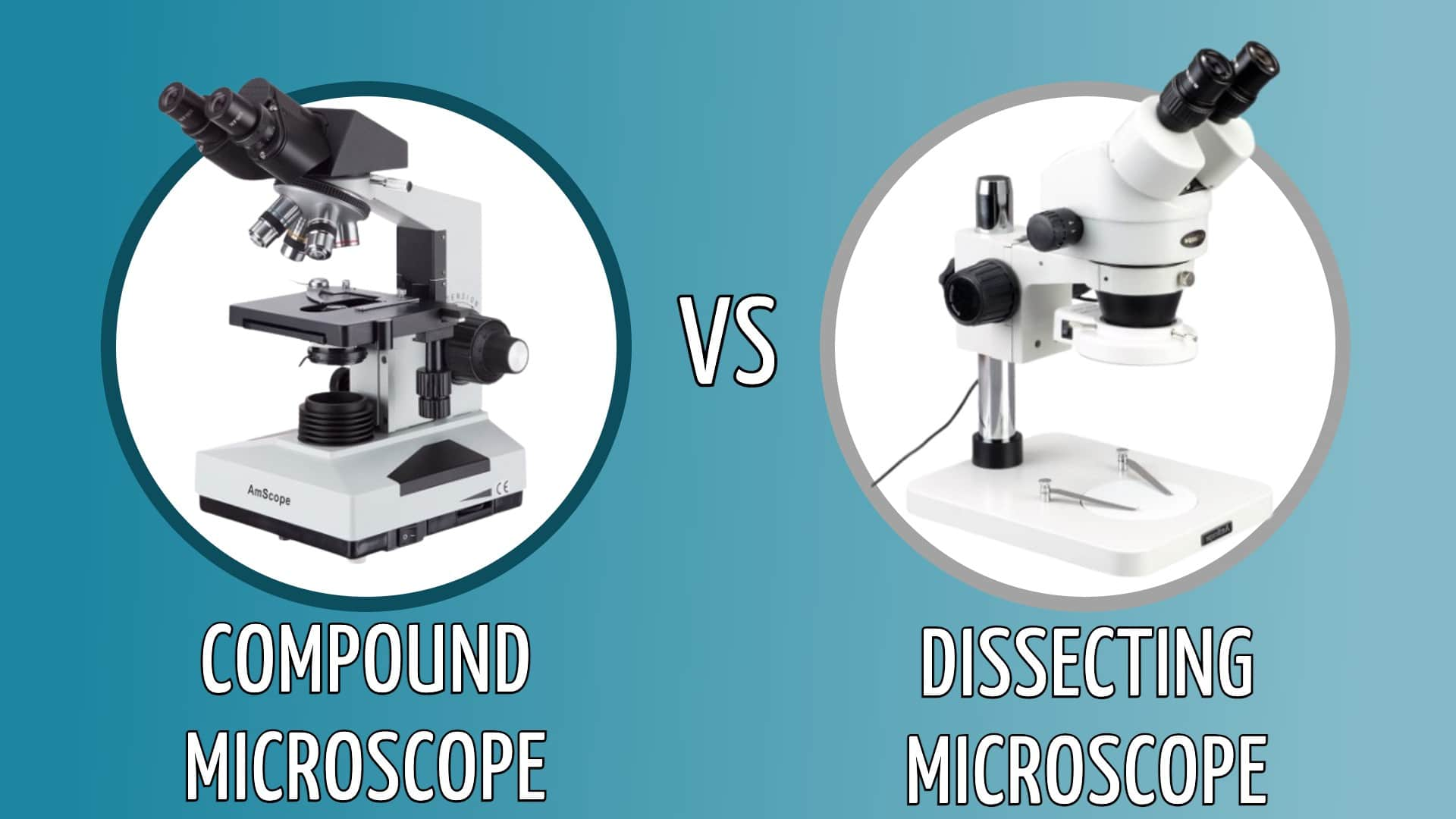 compound vs dissecting microscope