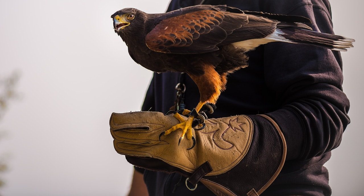 eagle on a person's hand