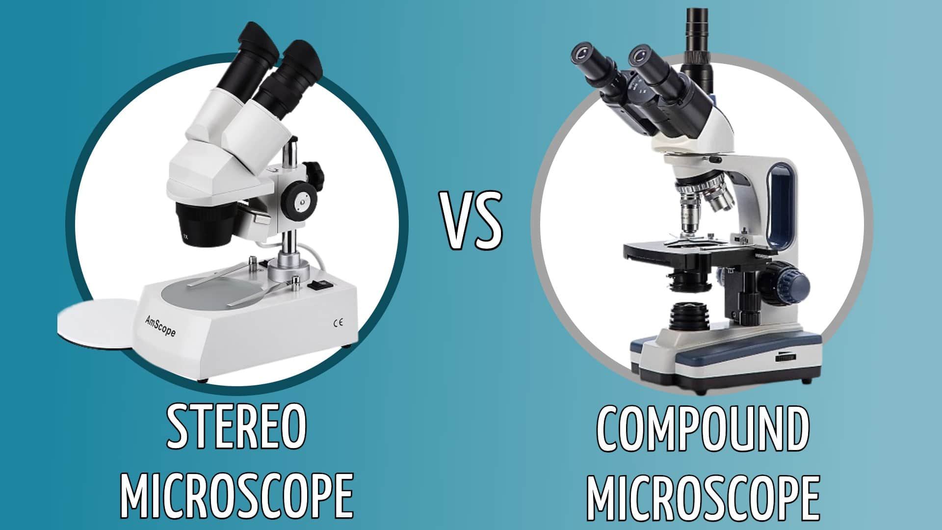stereo vs compound microscope