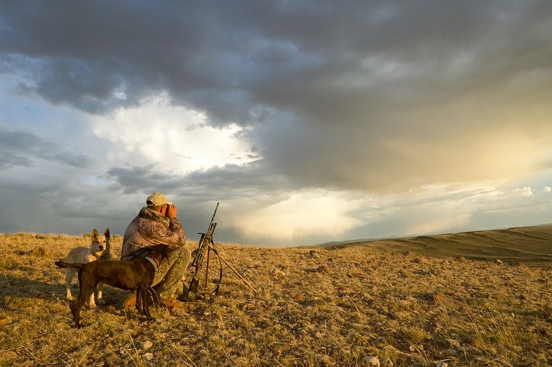 A,Camouflaged,Hunter,Kneels,Beside,His,Tracking,Dogs,And,Rifle