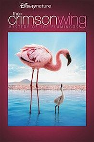 Crimson Wing – The Mystery of the Flamingo