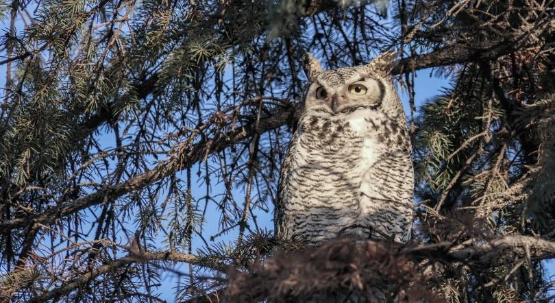 OWL fet. image_Piqsels