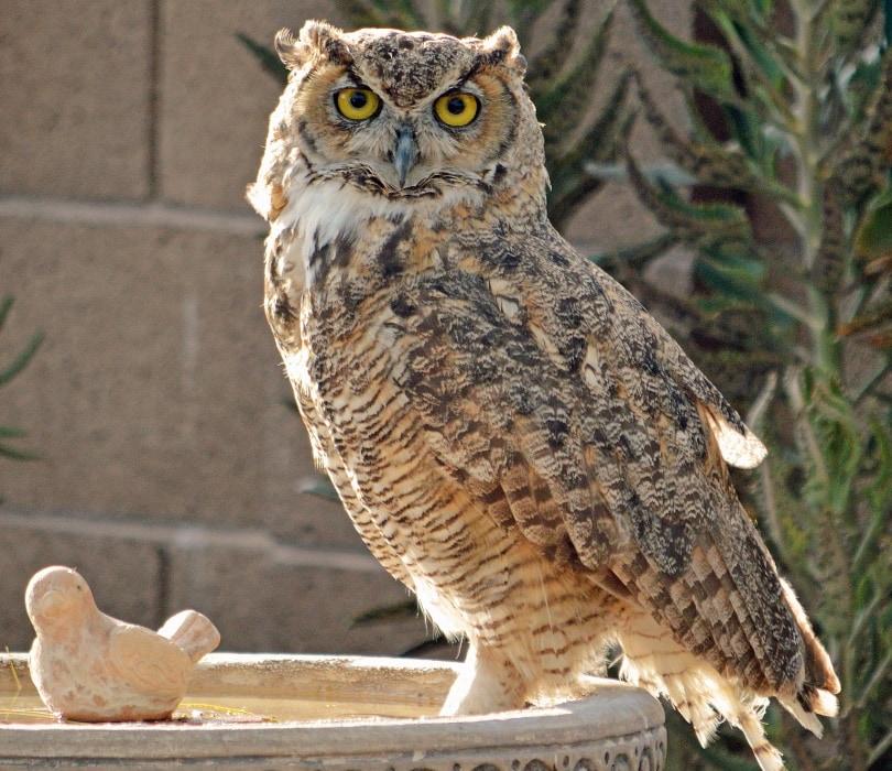 Owl Birdbath_Pixabay