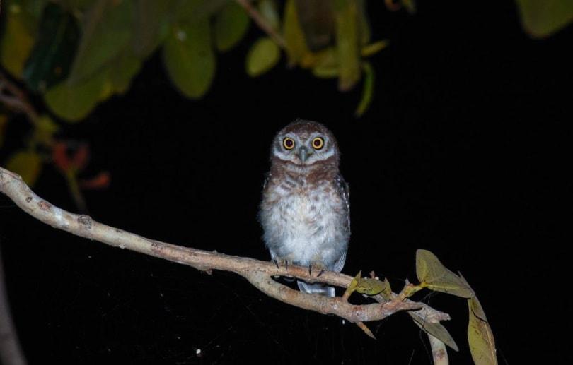 Owl night_VIJAY RICHHIYA_Pixahive