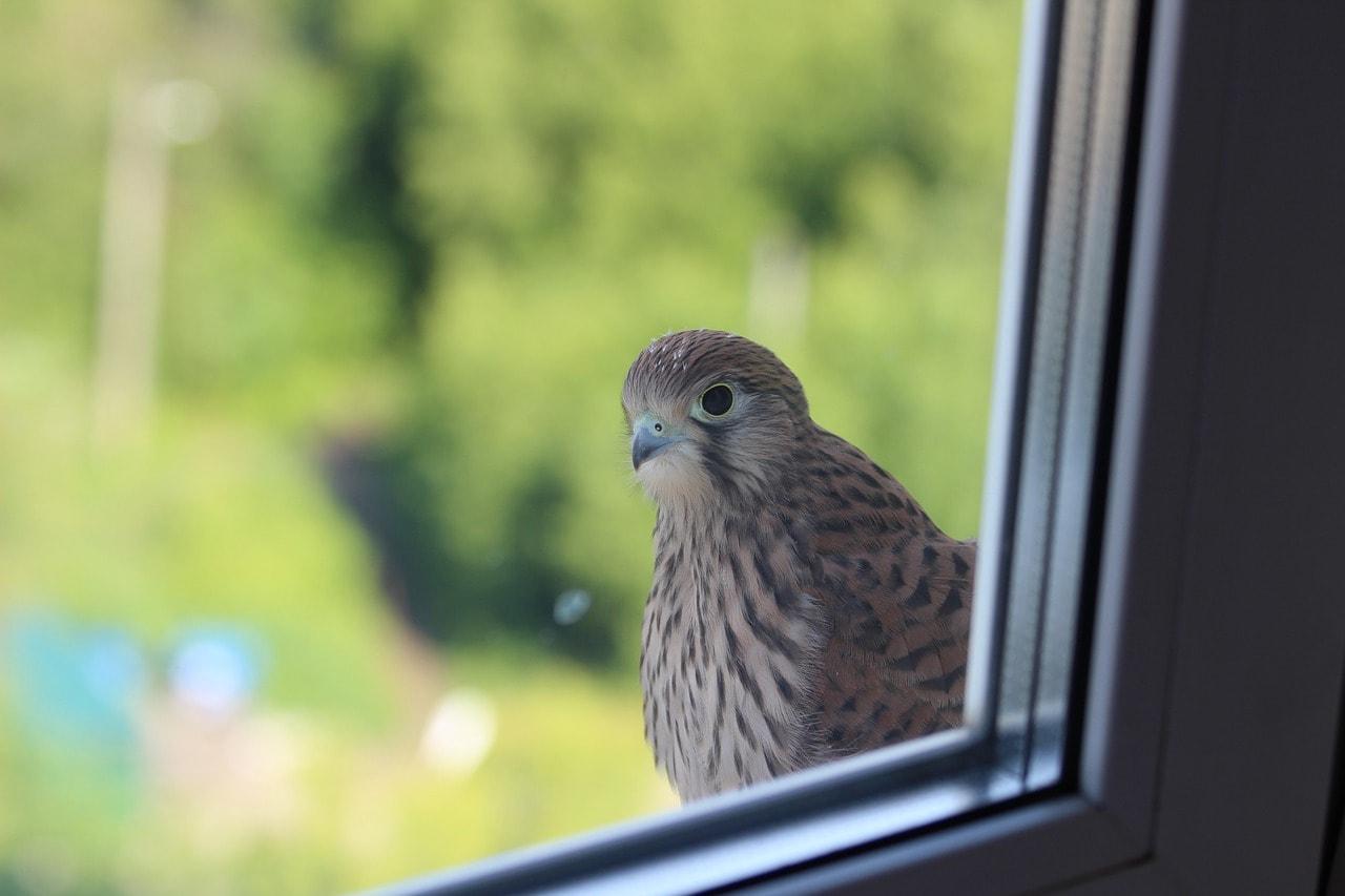 bird in the window