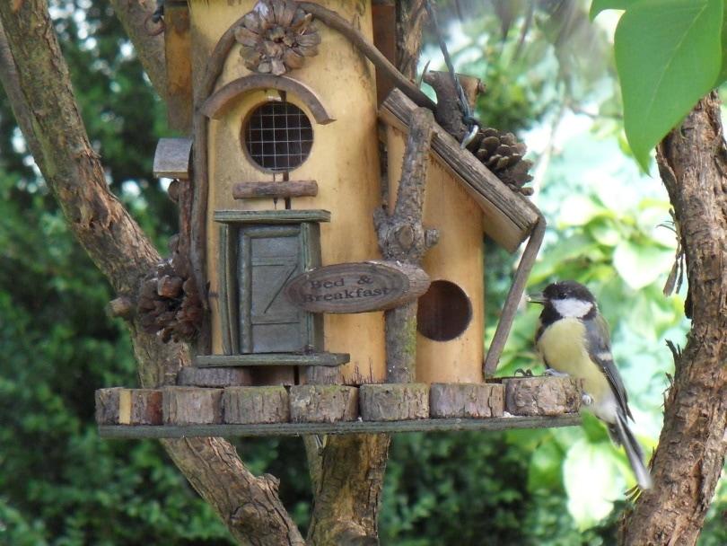 decorative feeder_Piqsels
