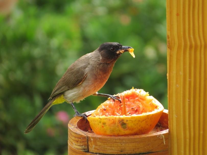 fruit feeder_Piqsels