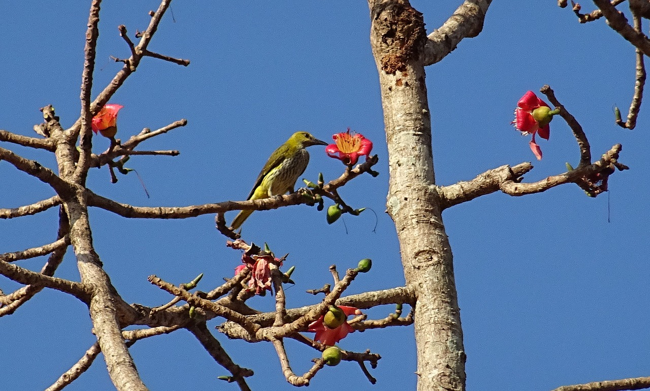 golden oriole and flower