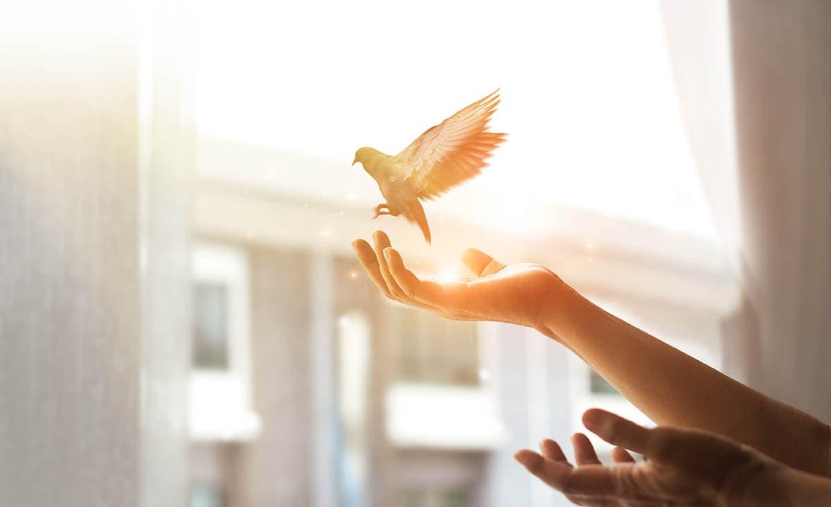 hand freeing a bird