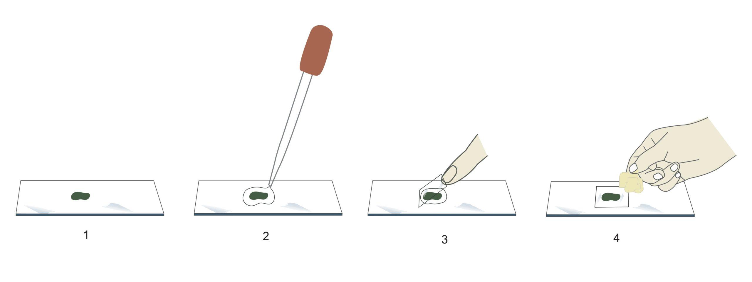 how to prep a microscope slide