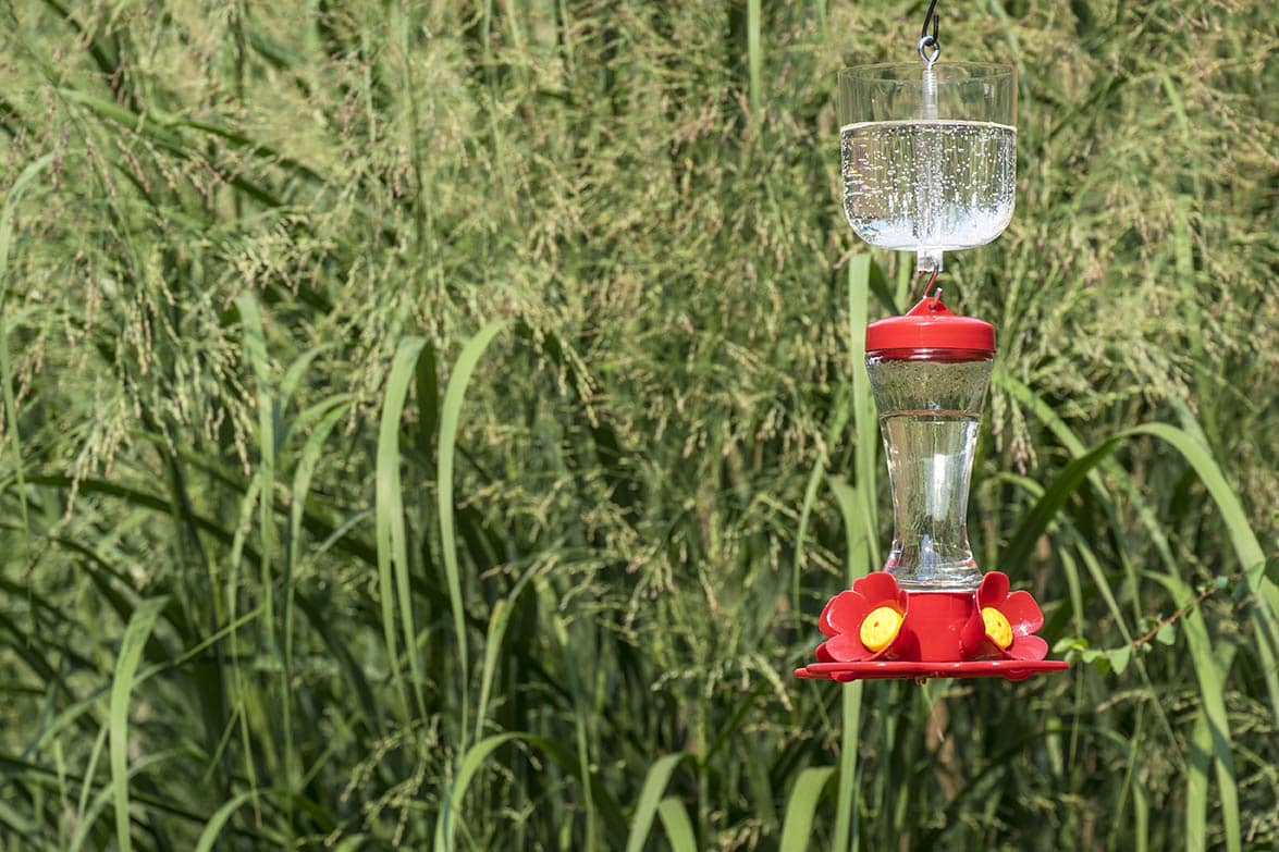 hummingbird feeder with an ant moat