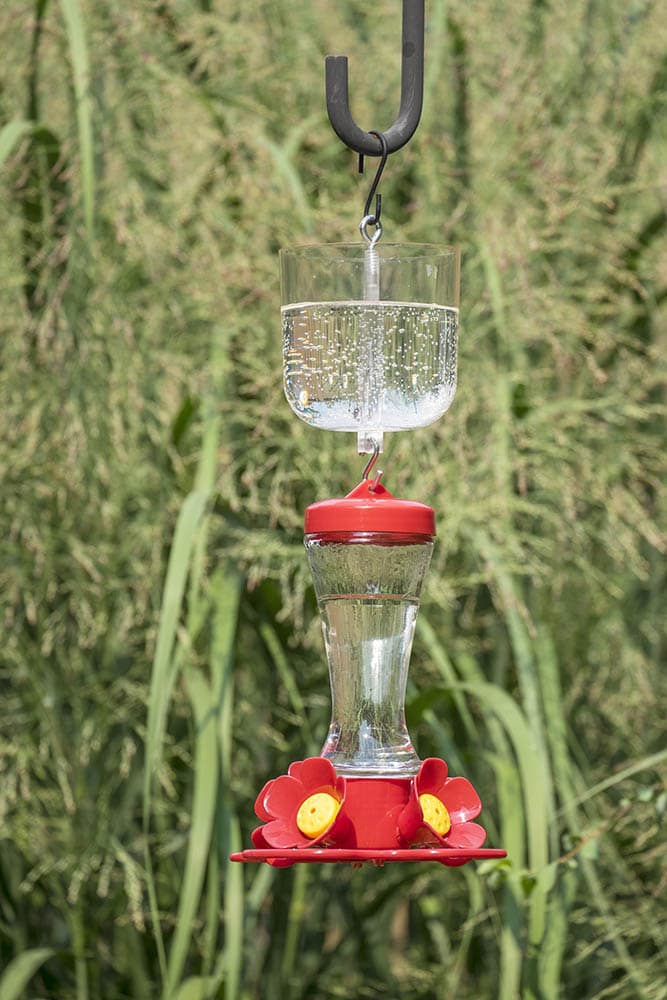 hummingbird feeder with ant moat