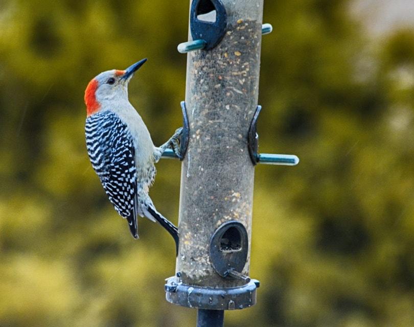 hummingbird feeder_Piqsels