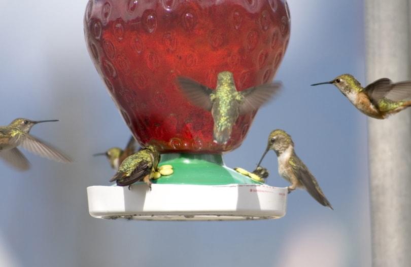 hummingbird nectar_Piqsels