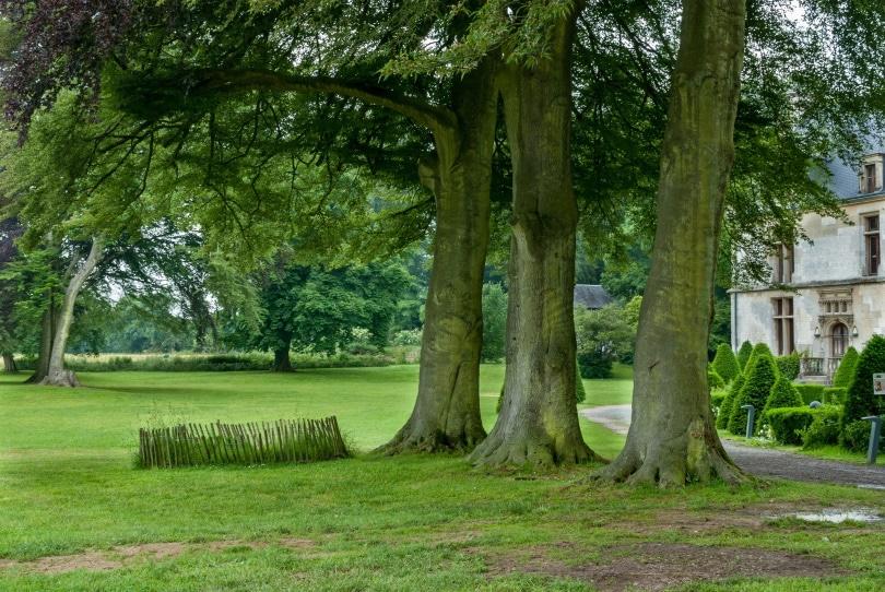 large trees_Piqsels