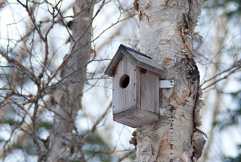 nesting box_Rodrigo.Argenton_Wikimedia