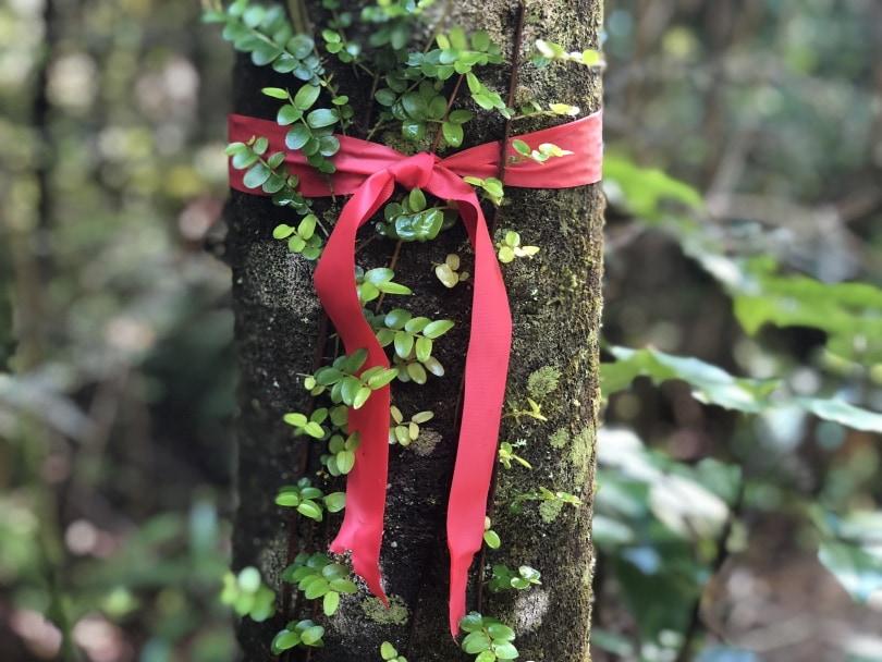 red ribbon_Piqsels