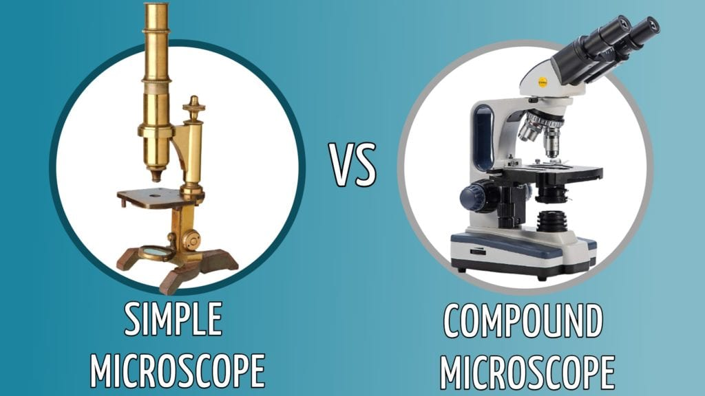 simple vs compound microscope