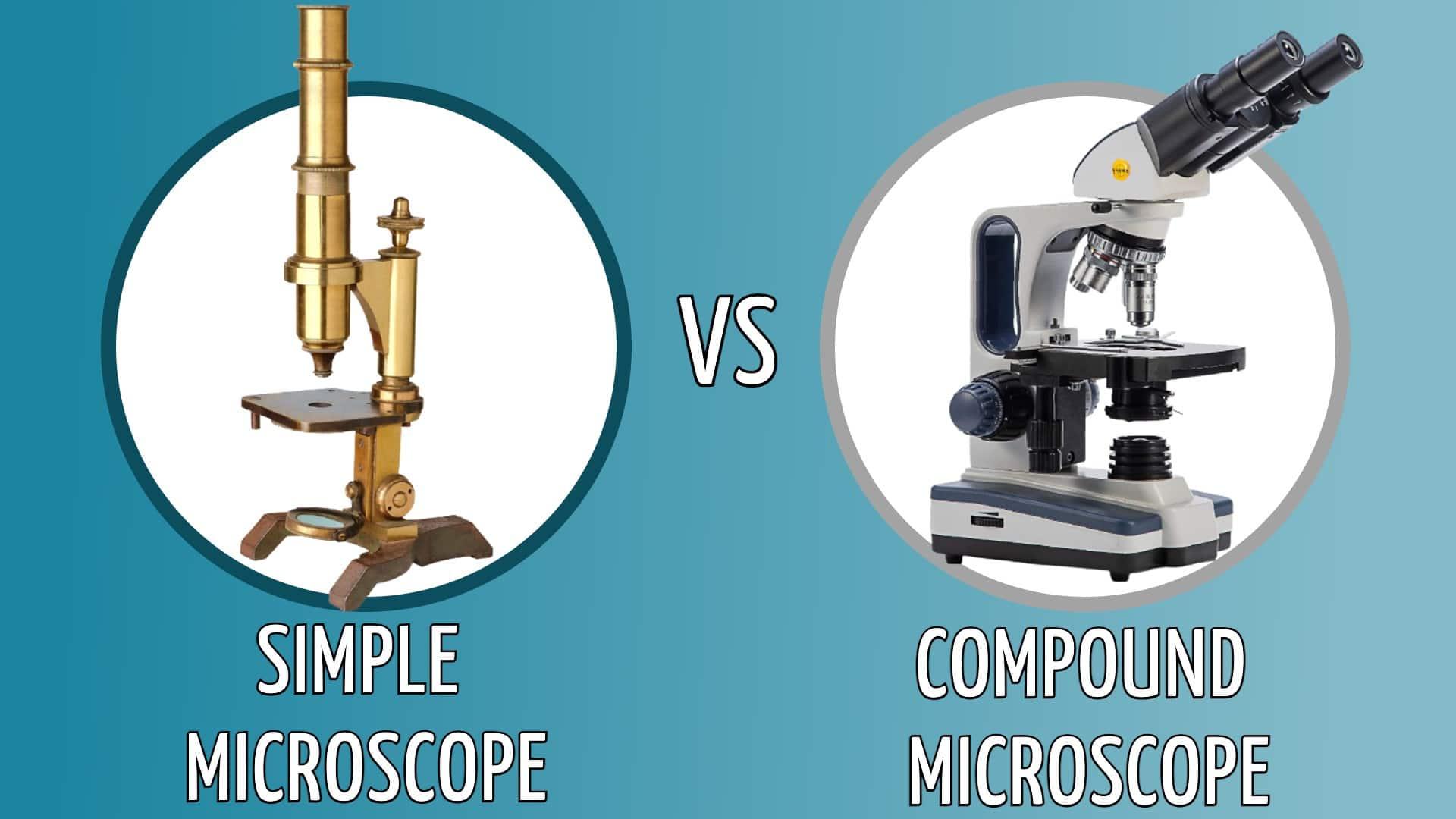 simple vs compound microscope