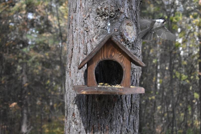 tree bird feeder_Piqsels
