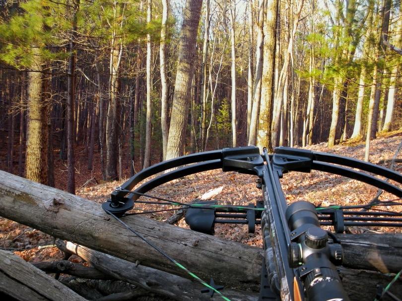 crossbow scope II_Maria Dryfhout_Shutterstock