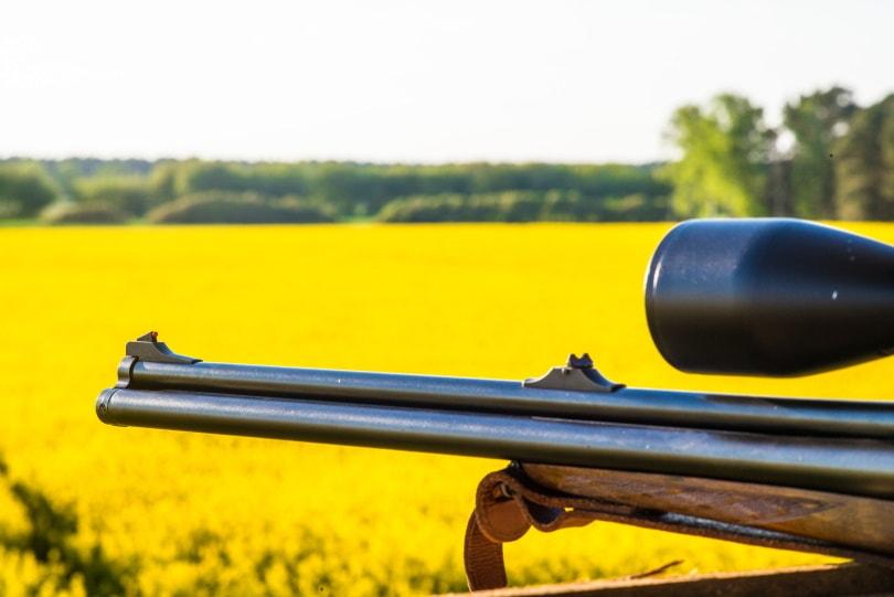iron sight_Mario Hagen_Shutterstock